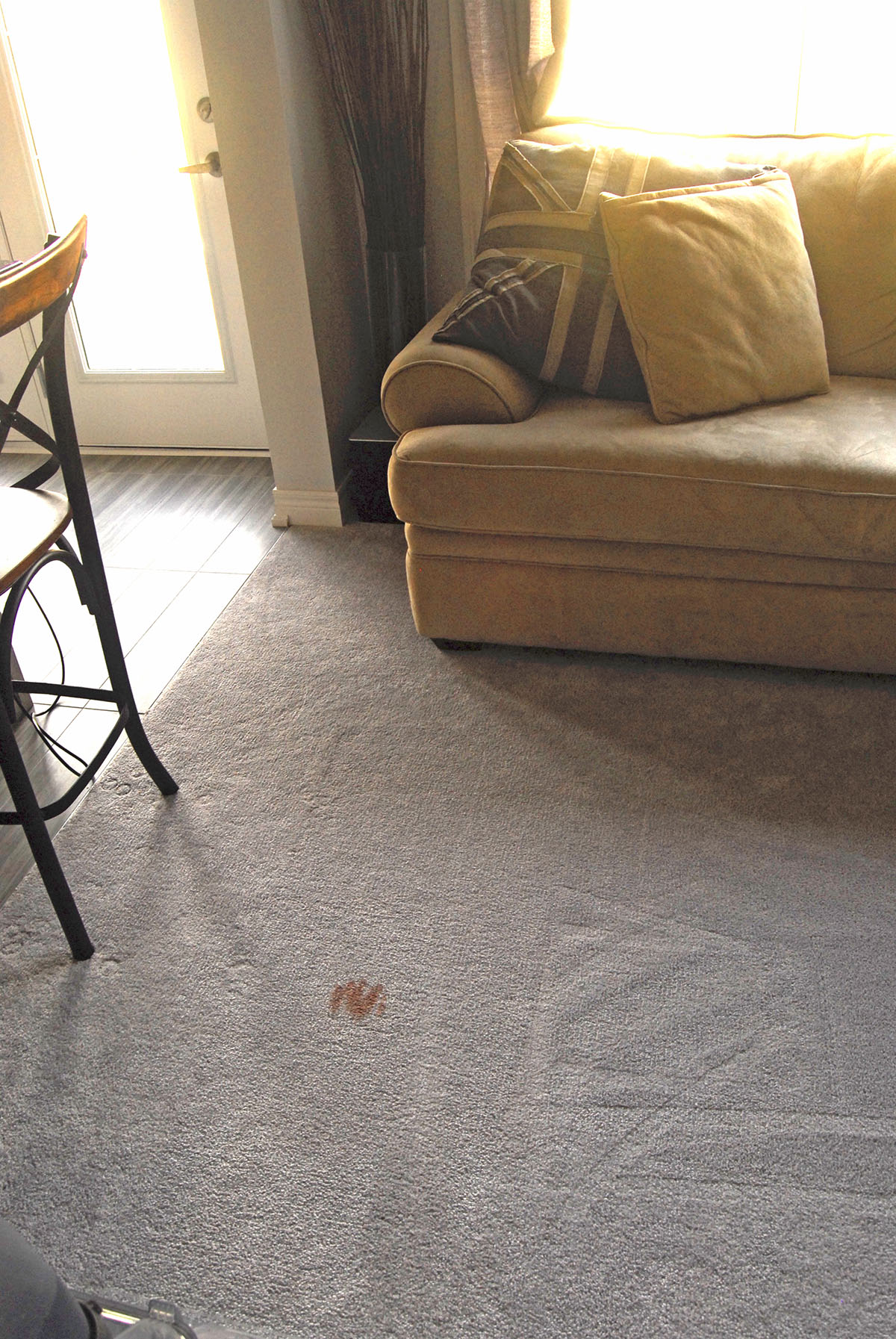 hoover powerscrub deluxe stain living room